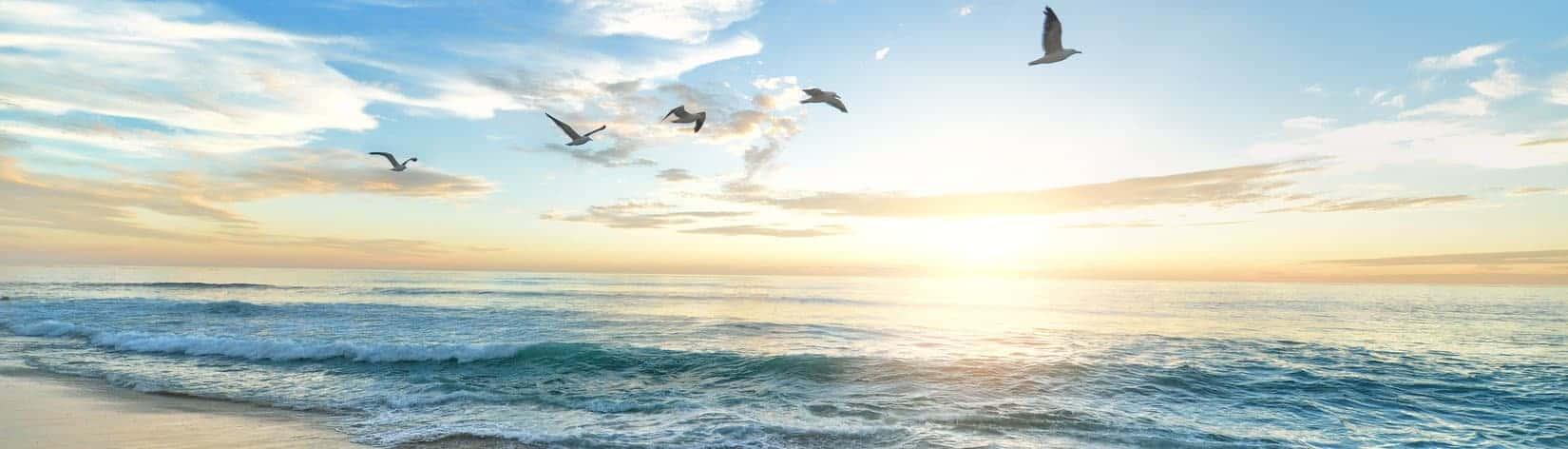 taivas ja linnut