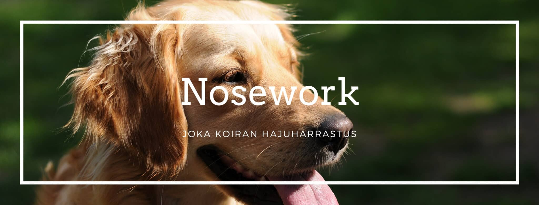 Nose Work -klubi