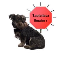 nosework sienikoira kouluttaja koira koirankoulutus